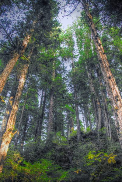 Tongess Rain Forest